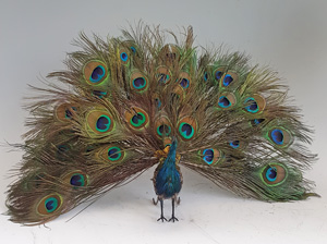 A rare Antique walking and fantail-displaying Indian peacock automaton, by Roullet & Decamps